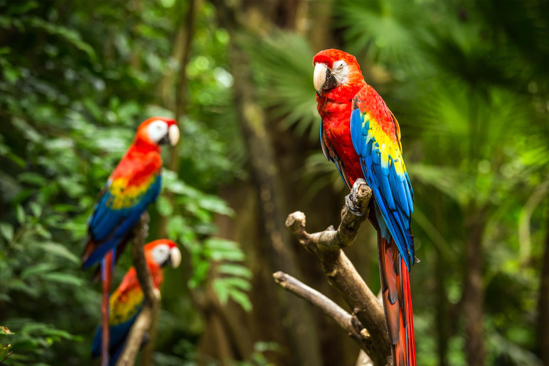 Bird Rescue Group