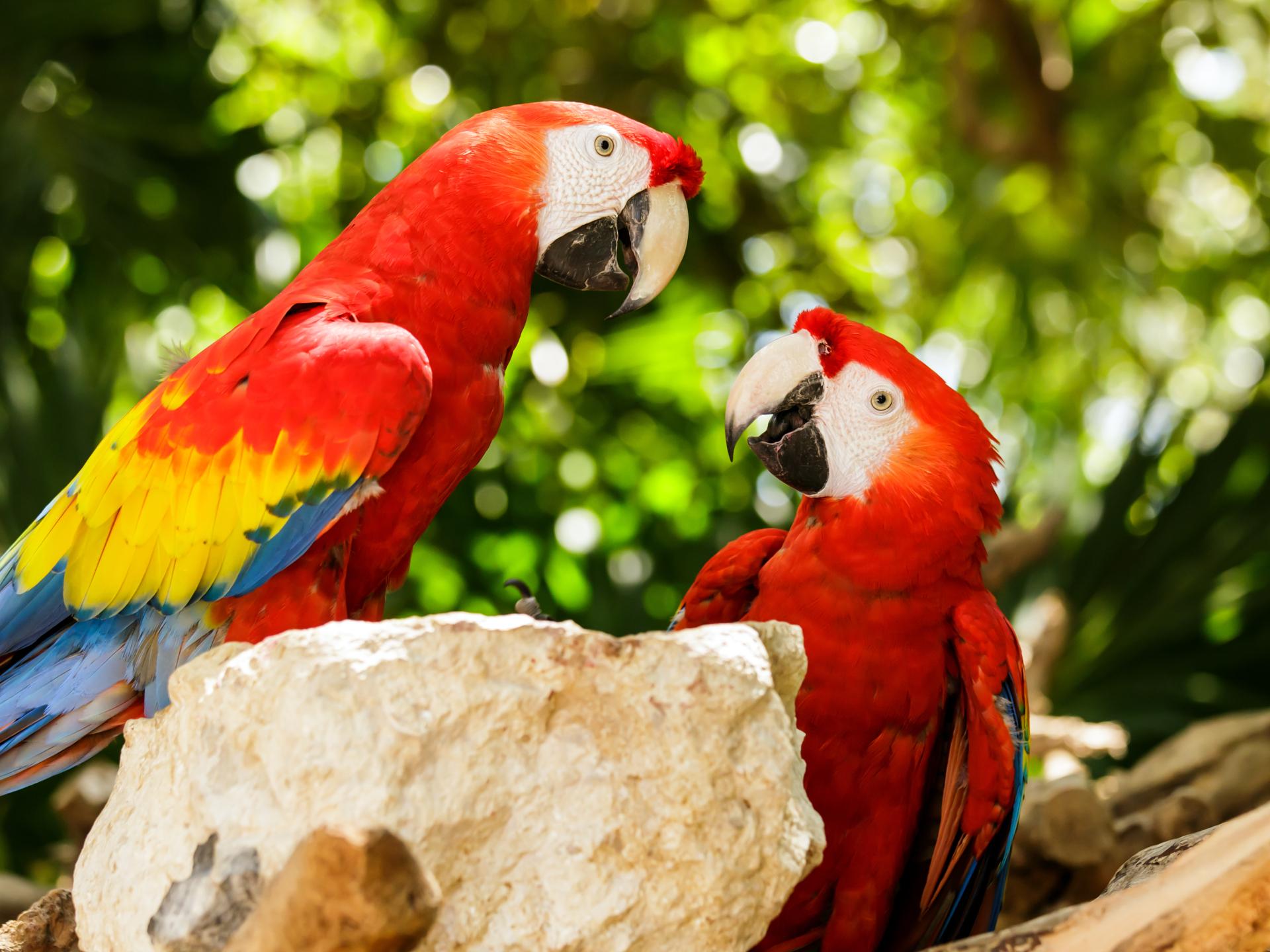 parrot-florida-bird-rescue-group-dfjd